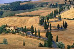 El Valle del Orcia (Toscana, Italia). Los cipreses protegen los caminos que llevan a las casas solariegas en mitad de campos pensativos