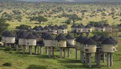 Sarova Saltlick Game Lodge, Kenya