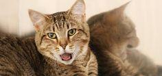 A espiritualidade dos gatos – identifique o que o seu gato quer dizer
