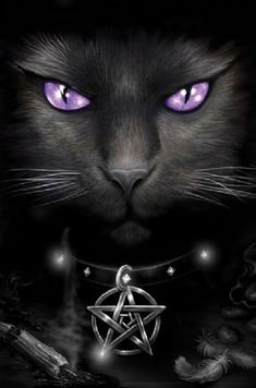 Gaze into the magnetic purple eyes of this magical black cat and be transfixed by her captivating stare.