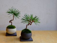 bonsai beauties.