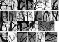 Tree found typography - great example of 'found' letterforms, real sense of spontaneity and effortlessness, could be an interesting concept to explore for my own alphabet