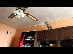 60 best ceiling fan comedy images on pinterest funny images cat jumps on the ceiling fan aloadofball Choice Image
