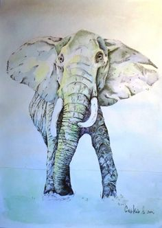 DmitrySonkin. Elephant. whatercolor 297x320