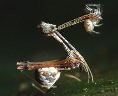 aranhaass