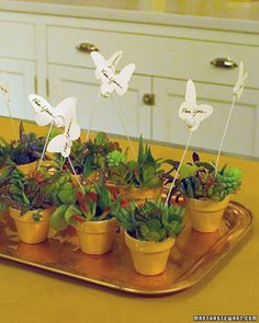 Little pots of succulents with butterflies flying over head. Great for name card...