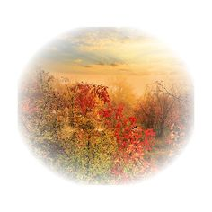 1320448.png ❤ liked on Polyvore featuring fall, autumn, backgrounds, landscape and tubes