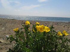 La primavera en la costa dorada, Reus. Foto: Pedro Palacios. [Envía tu foto por correo mailto: zona20@20minutos.es o por twitter #Primavera20m]