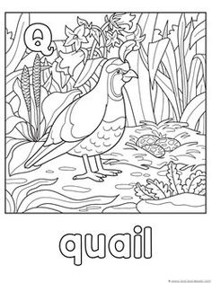 Animal Alphabet Coloring Pages M R