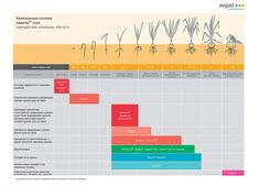Crop Protection, Bar Chart, Periodic Table, Garlic, Periodic Table Chart, Periotic Table, Bar Graphs