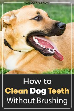 How to Clean Dog Teeth Without Brushing: Brushing your dog's teeth is never a bad idea. But when your dog resists brushing, then you should try out some other dog brushing teeth alternatives. #CleanDogsTeeth #DogTeethCleaning #CleanDogTeethWithoutBrushing