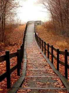 Follow this path #nature