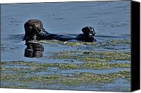 Otter be Happy Photograph by Scott Terry - Otter be Happy Fine Art Prints and Posters for Sale