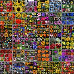 """Mosaic of Mosaics"" by MidiMacMan via Flickr"