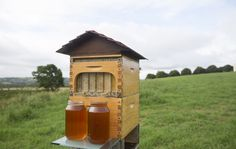 Basically it's an elaborate device that extracts honey without disturbing the bees - so now anyone can have a beehive in their own home.