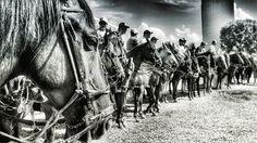 ©2016 Glauco Máximo  #light #memory #horse #horses #cavalo #vaquejada #monochrome #bw  #bnw #blacknwhite #blackandwhite #abqm #euapoioavaquejada #portalvaquejada #vaquejadalegal #medvet #photography #photo #fotojornalismo #art #animal #portrait #brasilia #brasília #bsb #df #brasil #brazil