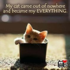 it's the nature of cats