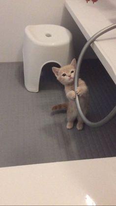 ホースをつかむ姿に一発KO お風呂場が大好きな仔猫がたまらなくかわいい