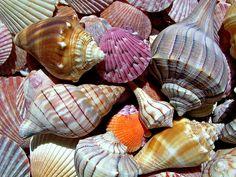 Brewing a Sea Shell Spell | Flickr - Photo Sharing!