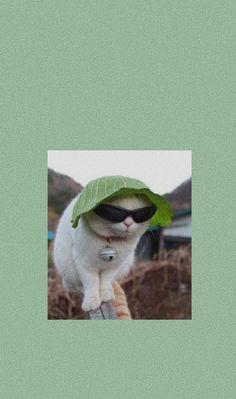 Iphone Wallpaper Cat, Funny Cat Wallpaper, Animal Wallpaper, Cute Cartoon Wallpapers, Cute Animal Photos, Funny Animal Pictures, Cute Little Animals, Cute Funny Animals, Gatos Cool