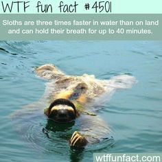 What the heck sloths. Pick a place to live. A you a fish or a leaf that learned to move on its own.