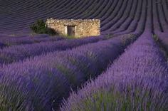 Image result for stone buildings in fields in provence