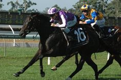 Danesiri (AUS) 2008 Dkb.m. (Home On The Grange (AUS)-Lea Tonde (AUS) by Filante (NZ) 1st Wiggle Quality (AUS-G3,1400mT,Warwick Farm) (photo: Racing and Sports)