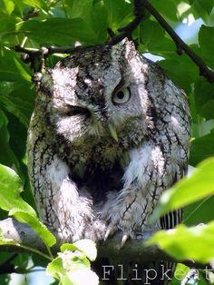 Территория Сов   Owlzone   Совы