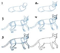 How to Draw Cat Bodies in Poses | Savanna Williams