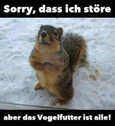 """""""Unser"""" Eichhörnchen geht auch an die Vogelfutterstelle UND NICHT an das extra Eichhörnchenhäuschen,welches wir wextra aufgehängt haben!!!"""