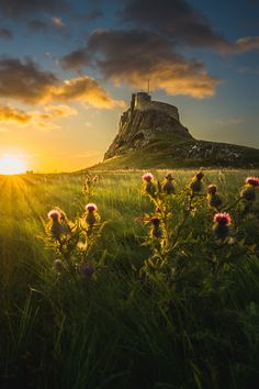 "heaven-ly-mind: "" Lindisfarne Castle at dawn """