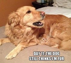 These funny dogs and cats are on a undertaking to make you smile.See more ideas about Funny animals, Dog cat and Cute animals.Read This Top 24 Funny Cats and Dogs Best Cat Memes, Cat And Dog Memes, Funny Animal Memes, Cute Funny Animals, Funny Animal Pictures, Funny Cute, Cute Cats, Funny Shit, Dog Pictures