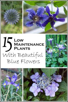 15 Low Maintenance Plants With Beautiful Blue Flowers | Want to add some blue flowers to your garden but don't want too much work? Check out this list of low maintenance plants with beautiful blue flowers.