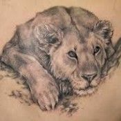 Amazing Lion & Tiger Tattoo designs for Men and Women