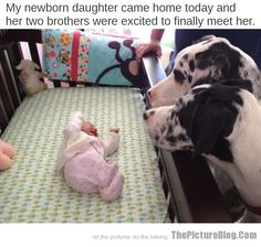 Newborn baby meets her two brothers