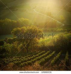 Sunset on Tuscany vineyards, Italy | late September