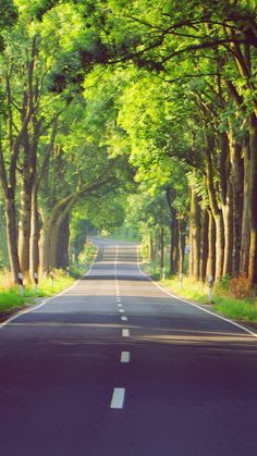 35+ Latest Forest Road Picsart Background Hd Images Download