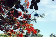 The details : on the Quadrado, Trancoso, Brazil ,  #bahia #brazil #dp2q #exotic #flowers #lamps #quadrado #quattro #sigma #thedetails #trancoso #trees #tropical #uxua