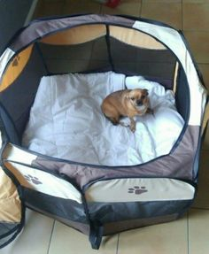 Puppy Dog Playpen! Great For Keeping Your Pup Contained When Too Young To  Run Freely