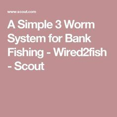 A Simple 3 Worm System for Bank Fishing - - Scout Fishing Worms, Bass Fishing Tips, Crappie Fishing, Best Fishing, Kayak Fishing, Fishing Stuff, Different Fish, Spawn, Fishing Equipment