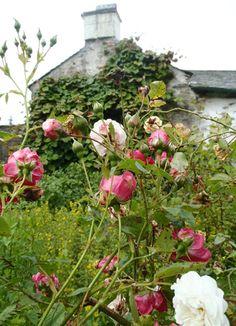 Manka in Hill Top farm (Beatrix Potter's house)