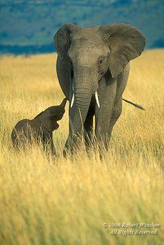 Parent&Baby Elephants