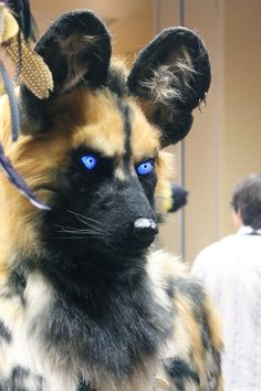 This African wild dog fursuit is AMAZING!