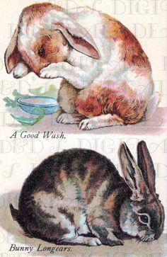 2 Different AMERICAN BUnny Rabbit Vintage by DandDDigitalDelights