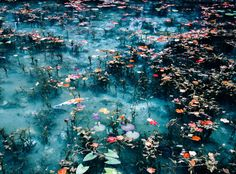 "Taka-Jun: I was in ""Monet's Pond"" in the city of Seki in Gifu Prefecture. Nature Aesthetic, Aesthetic Images, Blue Aesthetic, Aesthetic Wallpapers, Tres Jolie Photo, Half Elf, Art Chinois, All Nature, Wall Collage"