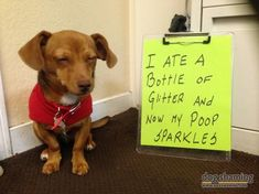 Dog Shaming features the most hilarious, most shameful, and never-before-seen doggie misdeeds. Join us by sharing in the shaming and laughing as Dog Shaming reminds us that unconditional love goes both ways. Animal Jokes, Funny Animal Memes, Dog Memes, Cute Funny Animals, Funny Animal Pictures, Dog Pictures, Funny Cute, Funny Memes, Dog Shaming Pictures
