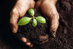Sustainable Sites Initiative - Soils
