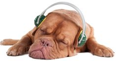 How to Deal With Noise-Induced Anxiety in Dogs