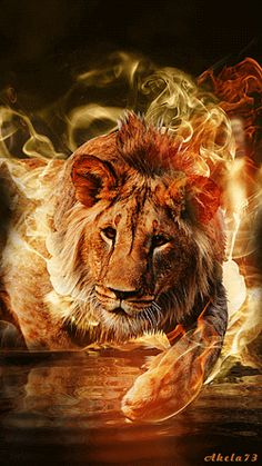 The Lion (Jesus the conquering Lion of the tribe of Judah and the Lamb who was slain). Fire Lion, Animals And Pets, Cute Animals, Lion Wallpaper, Tribe Of Judah, Prophetic Art, Lion Of Judah, Lion Art, Gif Animé