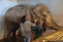 Nie żyje słonica Magda